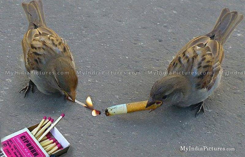 BIRD-www.viand.yn.lt